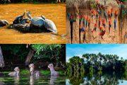 Spend 3 or 4 Day on the exotic Napo Amazon Adventure tour