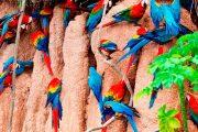 Puerto Maldonado tours is a Peru Amazon tours jungle travel operator agency